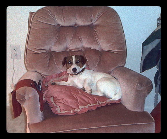 rjack in chair